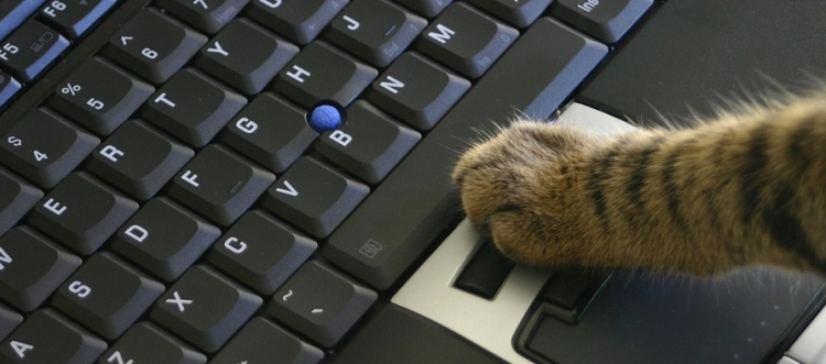 cat clicking on laptop