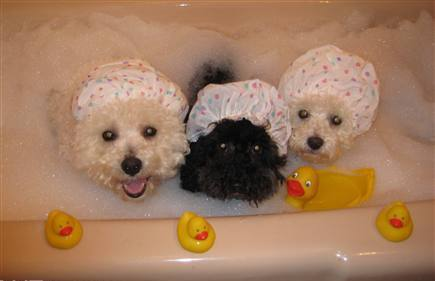 Rub a dub dub - 3 delightful dogs in a tub